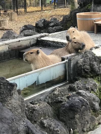 さいたまこども動物自然公園 子連れ