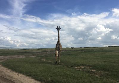 【現地速報】ロンドン・ナイロビ出張(その35) おまけのマサイマラ、3度目の サファリで本麒麟に遭遇!