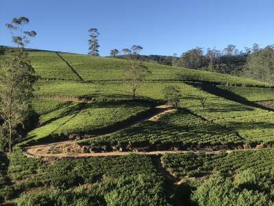 シンハラ王朝の歴史と紅茶の国へ(ヌワラエリヤ~コロンボ編)