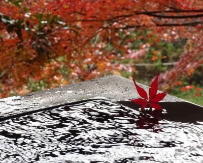 等々力渓谷 九品仏浄真寺の紅葉