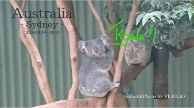 2018夏 オーストラリア・シドニー回顧録〈第3幕〉 【3日目:動物園とアイーダ編】