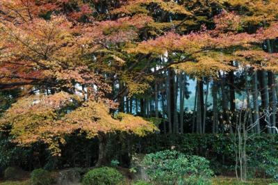 いい古都チケットで行ったり来たり~京都国立近代美術館・随心院・宝泉院・勝林院・三千院編~