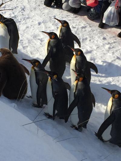 真冬の東川、旭川、旭山動物園の旅