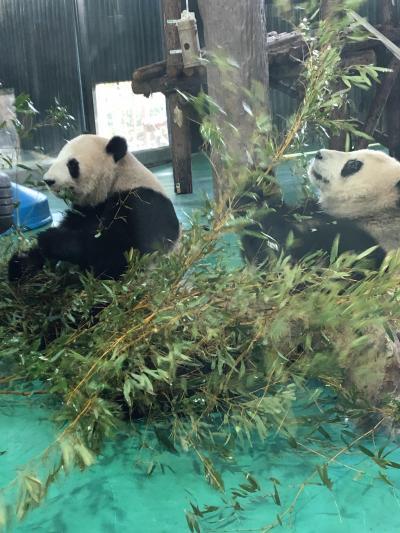 2019~2020 年末年始 上海&上海ディズニーランド ⑥動物園~七宝老街