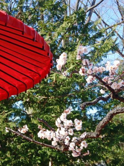 梅が咲いた向島百花園