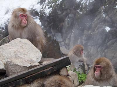 スキーとお猿と善光寺