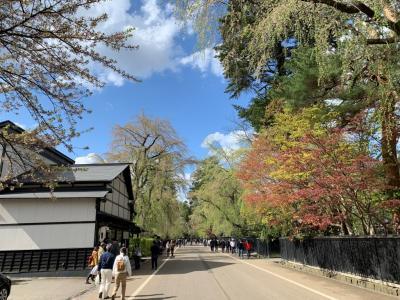 角館_Kakunodate みちのくの小京都!17世紀の武家屋敷の名残りを遺す桜の名所