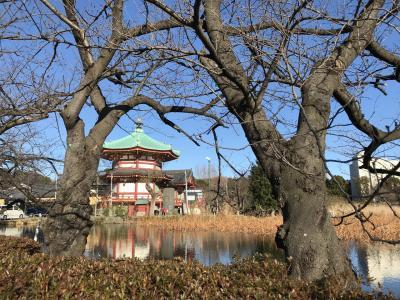 上野公園、東京国立博物館、上野東照宮、弁天堂、旧岩崎邸庭園をぶらり散策