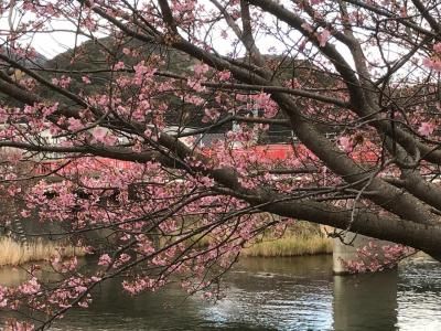 春の訪れ⁉ ~ 暖かな河津&下田の散策 ~