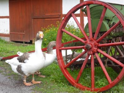 5歳娘を連れて夏休みスウェーデン・ノルウェー11日間の旅5-見所いっぱい!ユールゴーデン島後編