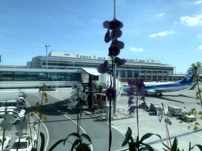 松山空港から那覇へのフライトの外の眺め・・飛行機の非常口席のメリットとデメリット