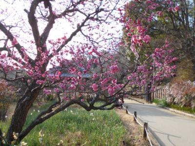 女子会ランチと公園(府立錦織公園)散策
