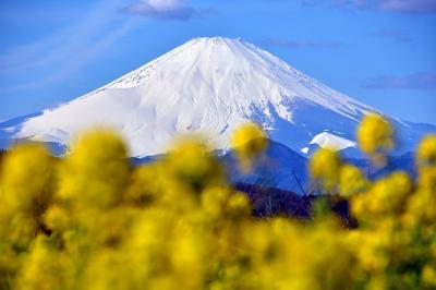 第120回しもそが五郎十郎朝市と、二宮町吾妻山公園の菜の花