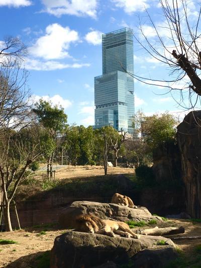 久しぶりの天王寺動物園