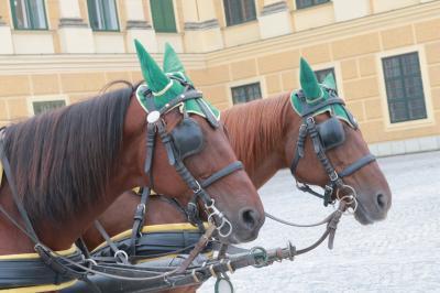 個人手配で中欧一人旅① 大好きなウィーンへ! シェーンブルン宮殿