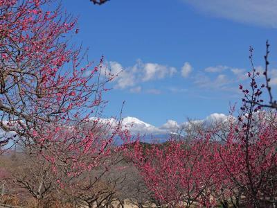 """梅が咲いた岩本山公園 2020.02.02 =""""絶景★富士山 まるごと岩本山""""="""