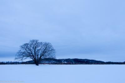 白銀の世界を求めて北海道へ写真撮影旅行
