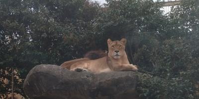 2020.1 三連休の間に母娘で東武動物公園に行ってみた