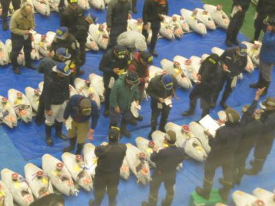 豊洲市場 マグロのせりを朝見学