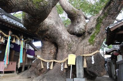 樹齢千年超のクスが生育するパワースポット! ~門真市の三島神社~