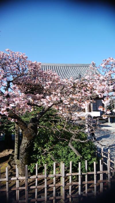 節分直前、西新井大師と小網神社に初詣