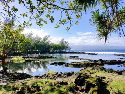 母を連れてオアフ島&ハワイ島 6泊8日★  ②TheBusにのってハレイワへ