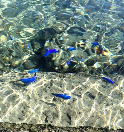 宮古島 海岸線の旅② 魚が青いよ大神島 ~2泊3日の観光代が970円て の巻~