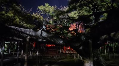 小岩  樹齢六百年の大松とラーメン