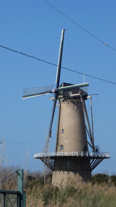 堺にオランダ風車があるらしいので見に行ってきた