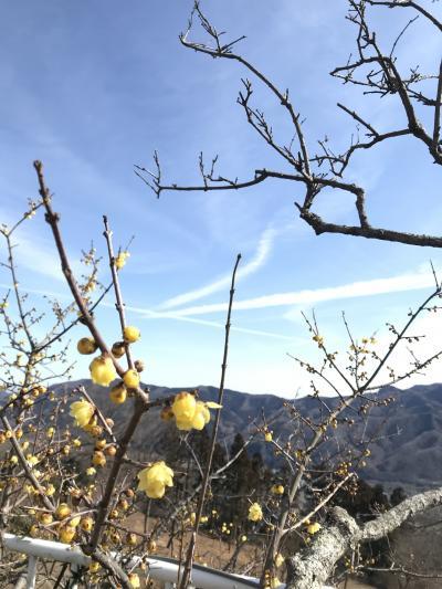宝登山神社と香り豊かな蝋梅!秩父三社めぐり その1