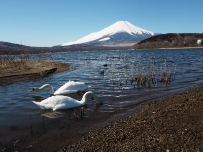 高指山ハイキングコースと石割の湯、そしてダイヤモンド富士