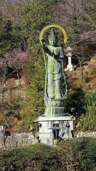 節分の日に咲き始めていた、中山寺梅林へ開花状況を確認しに行きました その3。