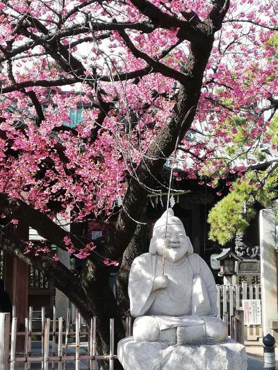 品川の荏原神社で桜見頃