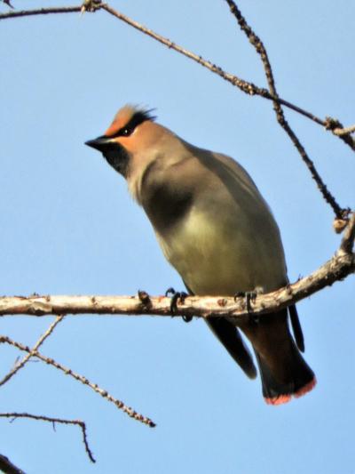 奥須磨公園の冬の野鳥たち