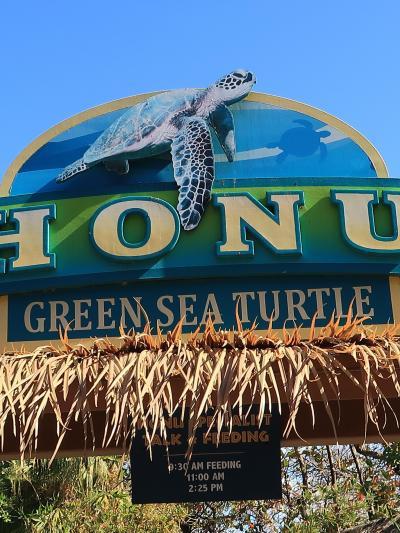 Oahu-29 シーライフパーク ホヌ(アオウミガメ)☆海亀=神聖な生き物・守り神とも
