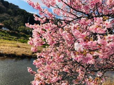 ジャイ〇ンを連れて河津桜を見に行ってきた