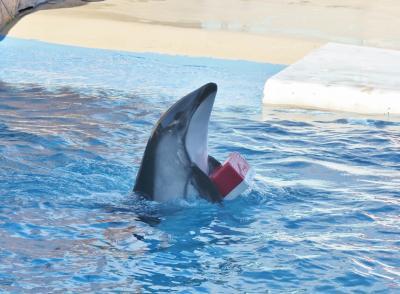 予定のない週末の過ごし方@下田海中水族館でショー三昧!