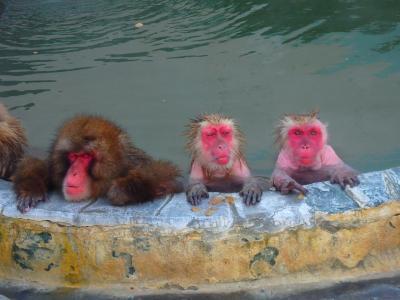 新幹線で行く函館 頭の中は「鮭茶漬けー♪」の旅 ①まずは目的のおサルの温泉へ