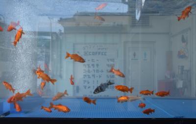 ヒトリナラ2020.2① 久しぶりの奈良は郡山から 金魚金魚