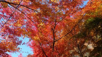 温泉宿2日目は黒川温泉までぶらり日帰り浴 紅葉と温泉でくつろぐ