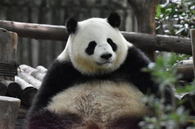 パンダ旅その5