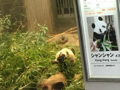2020パンダ鑑賞記録☆2月は日本列島横断パンダの旅☆上野動物園