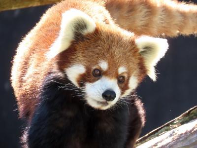 みさき公園  閉園まであと1か月半(涙) 岬での最後の活躍を見せる動物たちに会いに行きました