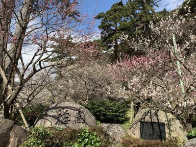 河津桜と熱海梅園1泊2日(熱海梅園編)