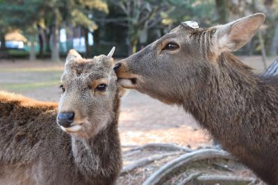 ヒトリナラ2020.02② あをによし鹿とたはむる奈良公園