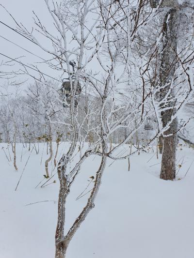 今年も一時帰国  2-  南国少女、北海道へ行く
