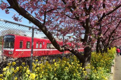 京急沿線にある河津桜の桜並木