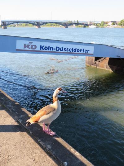 心の安らぎ旅行(2019年5月 Mainz マインツPart27 Rhein ライン川♪)