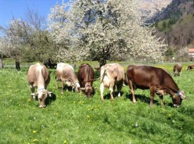 スイス、イタリア等6か国周遊15日間その3.ハイディの家、ピサの斜塔、フィレンツェ、ベネチア