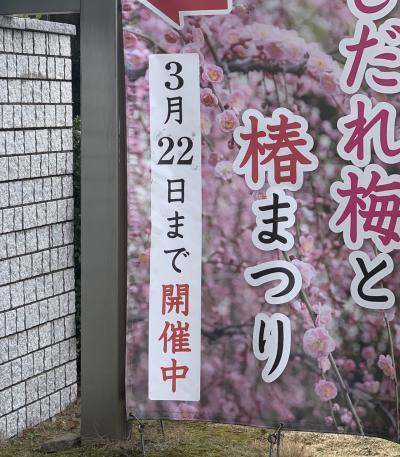 梅だより!城南宮と天満宮!News from plum!  Jonangu and Tenmangu Shrine